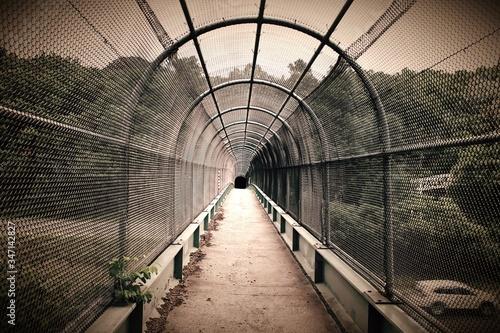 Fotografia Covered Footbridge Leading Towards Forest
