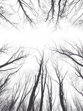Directly Below Shot Of Bare Trees On Forest
