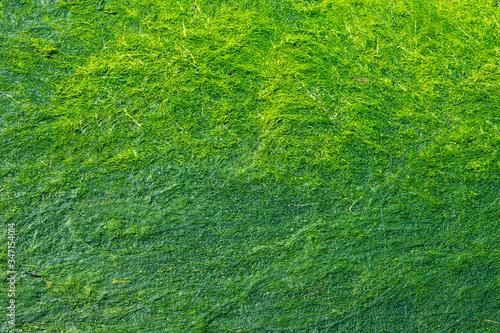 Tapis d'Algues Vertes Slika na platnu