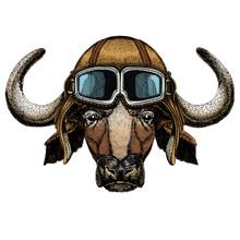Portrait Of Buffalo, Bison, Bu...