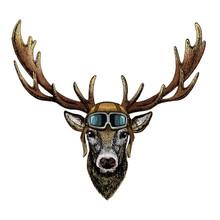 Deer Portrait. Head Of Wild Animal. Vintage Aviator Helmet With Googles.