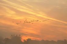 The Canada Goose Branta Canade...