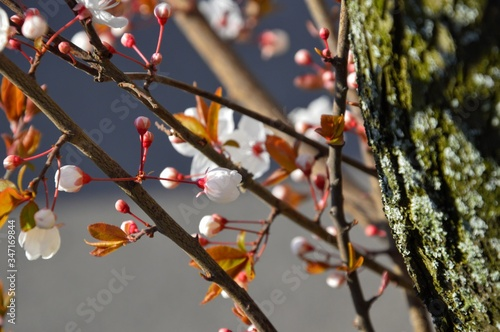 Foto Low Angle View Of Cherry Blossom Growing On Tree