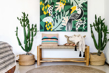 Wooden Bench Seat, Cozy Cushions, Plaid, Carpet On Floor And Cactus Plants