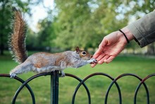 Closeup Shot Of A Human Hand Touching Squirrel In The Park