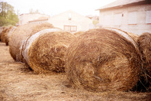 Bale Of Hay Lies On Farm, Animal Feed For Cows And Horses