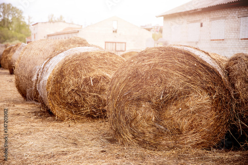 Carta da parati Bale of hay lies on farm, animal feed for cows and horses