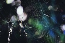 Close-up View Of Spider In Web
