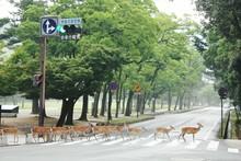 Deer Crossing Road