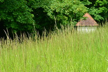 Rural Spring Landscape, Jersey, U.K. Tall Grass A Canopy Of Trees Over A Small Hut.