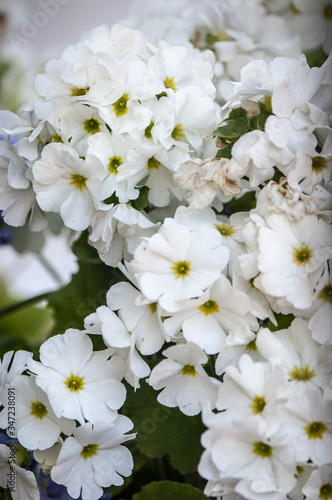 Close-up Of White Flowers #347238091