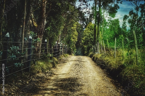 Footpath Amidst Trees In Forest Fototapet