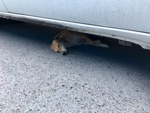 The Dog Is Sleeping Under The Car. Because The Weather Is Very Hot Therefore Had To Find A Shade