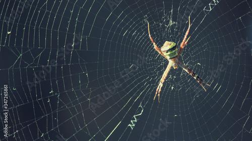 Fotografie, Obraz Close-up Of Spider On Web