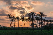 Silhouette Of Palm Trees Against Cloudy Sky