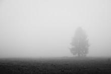 Silhouette Tree On Field In Foggy Weather