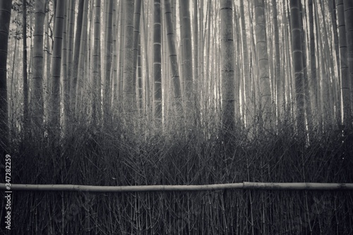 Fotografia Dried Plants And Bamboos In Foggy Weather