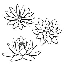 Waterlily, Lotus Flower Collection. Hand Drawn Black Line Sketch Of Tropical Flowers And Leaves Isolated On White Background. Vector Illustration