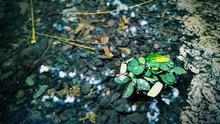 High Angle View Of Leaves On Puddle