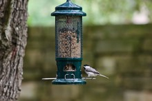 Carolina Chickadee Perched On Backyard Bird Feeder, Side View, Full Body, Room For Text, Bottom Of Picture