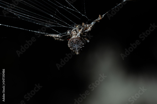 Photographie Close-up Of Spider On Web Over Black Background