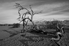 Dead Tree On Sand At Death Valley National Park