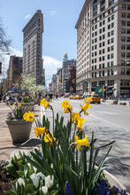 Yellow Flowers By Road Against Flatiron Building In City
