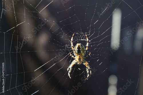 Close-up Of Spider On Web Poster Mural XXL
