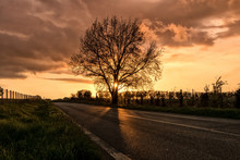 Silhouette Tree By Road Against Sky During Sunset