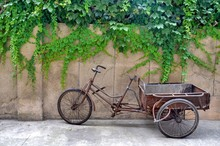 Rusty Tricycle Cart Parked By Plants Growing On Wall