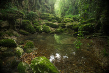 Scenic View Of Forest Stream