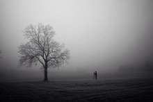 Silhouette Person Photographing Bare Tree On Field