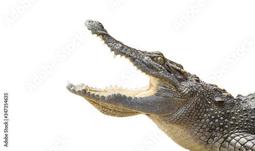 Foto crocodile on a black background.