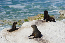Three Seals On The Rocks