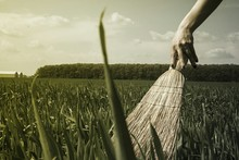 Cropped Woman Hand Holding Broom Over Corn Field Against Sky
