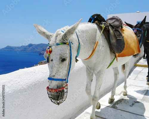 Fototapety, obrazy: Donkeys Walking On Footpath By Sea Against Clear Blue Sky