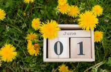 Calendar Organizer June 01, The First Day Of Summer On The Green Grass In Dandelions