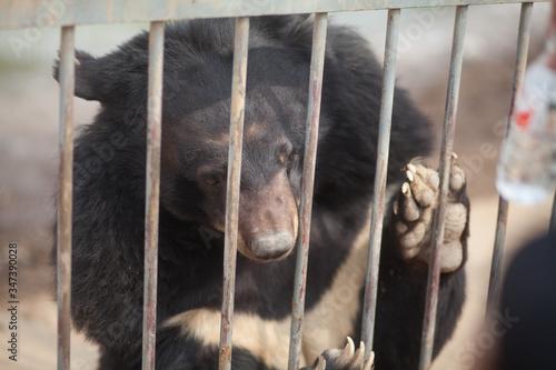 Bear In Zoo Fototapet