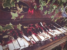 Close-up Of Plants On Old Piano