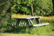 Picnic Table On Grassy Field