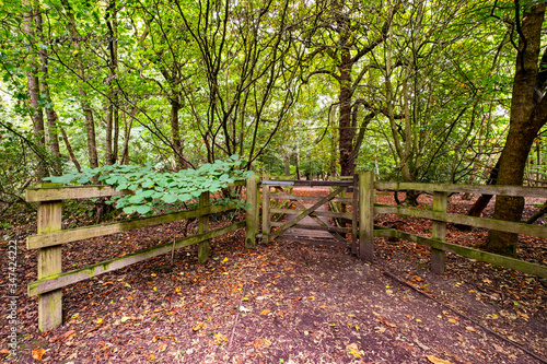 Entrance with closed gate to forest in Cheshire UK Canvas Print