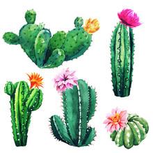 Watercolor Set Of Cactus Plant...