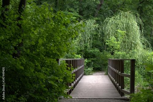 Photo Wooden Footbridge In Forest