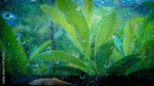 Fotografia Full Frame Shot Of Raindrops On Plant