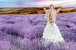 Leinwanddruck Bild - Beautiful Bride in wedding day in lavender field. Newlywed woman in lavender flowers. Young woman in wedding dress outdoors.
