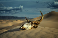Bull Skull In Sand Desert And ...