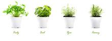 Herbs, Parsley, Basil, Thyme A...