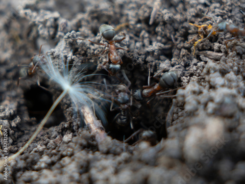 macro shot of ants on the ground in an anthill in a park Canvas Print
