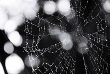 Close-up Of Wet Spider Web Outdoors