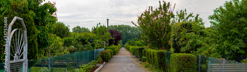 Photo path in a allotment garden, hedges left and right on the path